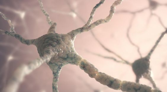 Scientists Discover Neural Networks Linked To Human Intelligence | Spirit Science
