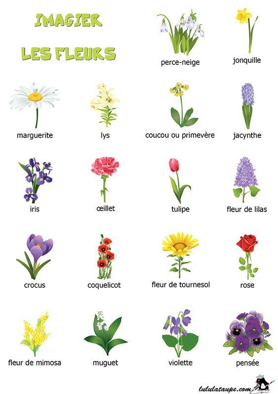 Imagier à imprimer, les fleurs
