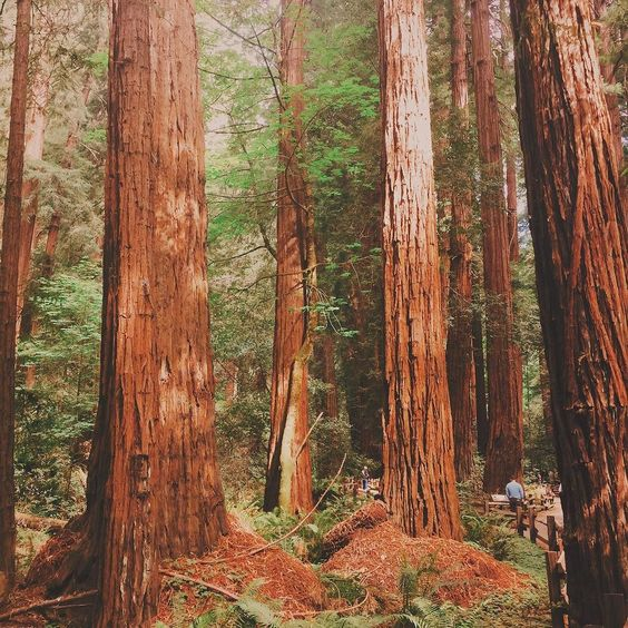 #nature #california #peaceful #muirwoods #roadtrip #beautiful #muirwoodsnationalmonument #summer #californiaadventure by malaykato