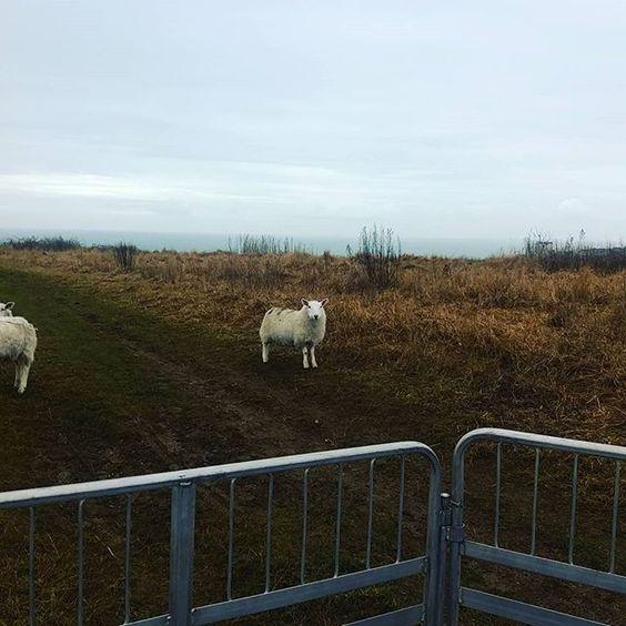 SHEEP!: