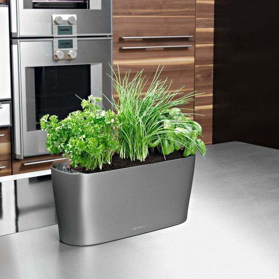 Self Watering Planter For Indoor Herb Garden On Kitchen