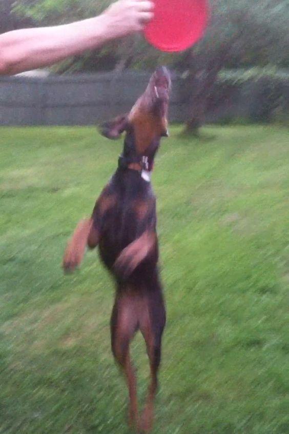 Holly jumping