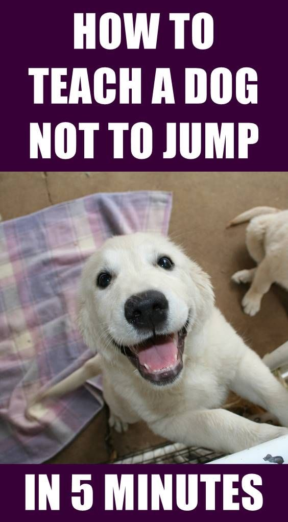 Your Dog Is Likely To Jump Up When Trying To Get Your Attention Or