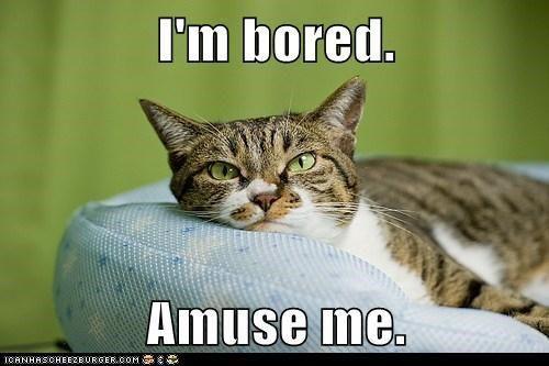 I M Bored Quotes: I'm Bored Amuse Me.
