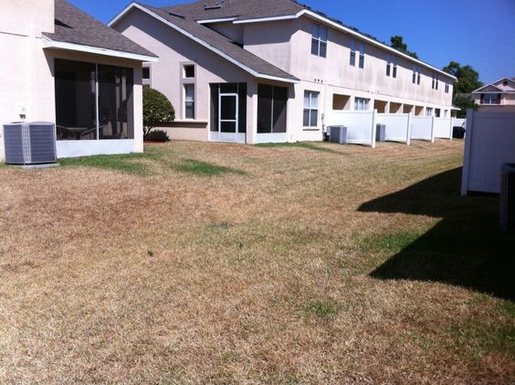 Extreme drought stress in St Augustine grass in Tampa.