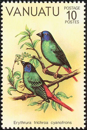 Blue-faced Parrotfinch stamps - mainly images - gallery format
