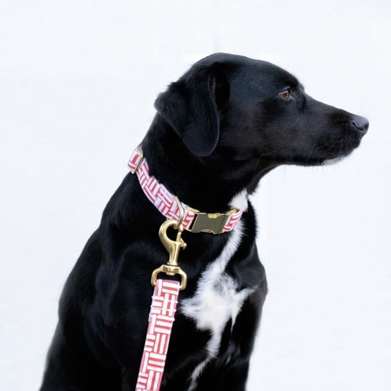 Bonjour Fido Stylish Leashes And Collars From Nyc Dog Mom Gifts Dogs Dog Lover Gifts