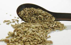 El Tahini es una pasta realizada a partir de semillas de ajonjolí molidas, muy utilizadas como condimento en la gastronomía de Oriente Medio. Ingrediente indispensable del hummus y del baba ganush ...