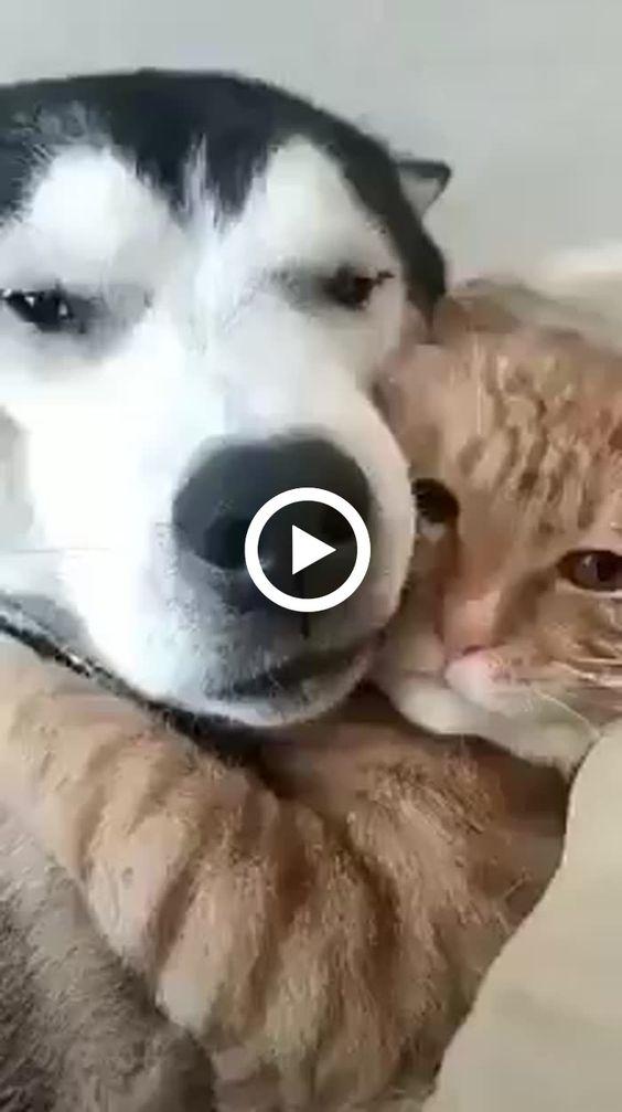 olha dois amiguinhos abraçados
