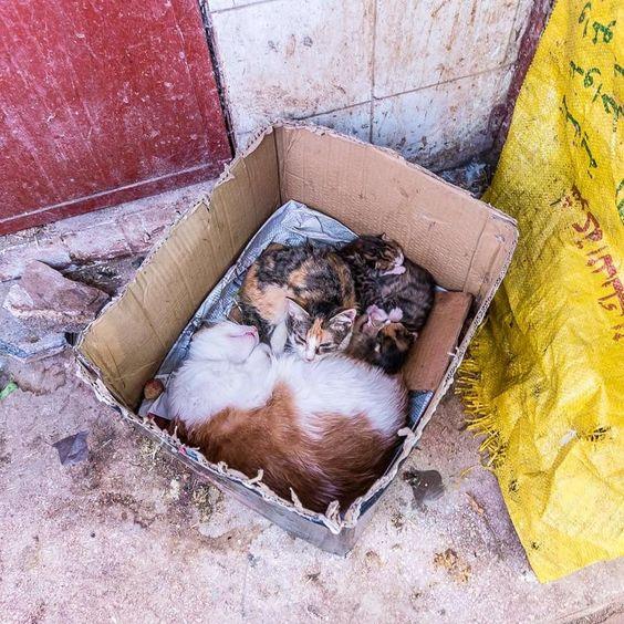 Guten Morgen ihr Lieben! Diese Kätzchen in Marrakesch haben mein Herz geschmolzen... #littlecityinmarokko #marrakesch #babycat #cats
