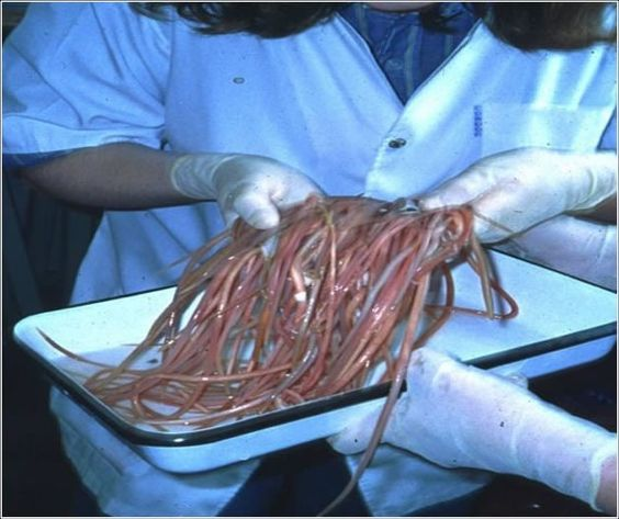 the tapeworm parasite What is a parasite a parasite is an organism that lives in or on another larger organism of a different species (the host), upon which it depends for food.