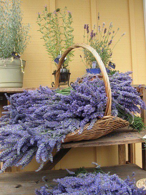 Basket of lavender                                                                                                                                                                                 Mais