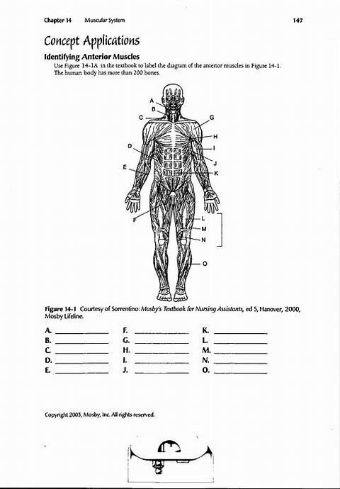 Pin On To Print Anatomy labeling worksheets