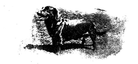 The legend of the Black Dog of the Hanging Hills: The legend of the Black Dog has been told by those living near the Hanging Hills of Meriden, CT for over 100 years. #Haunted #CT #Legends