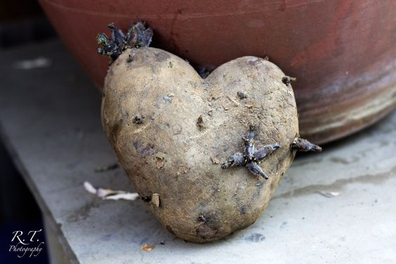 Who doesn't love heart shaped potatoes?