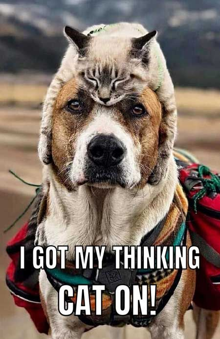 Funny Dog Meme with a dog with a cat on his head. #dogs #funny #meme #humor #barkinglaughs