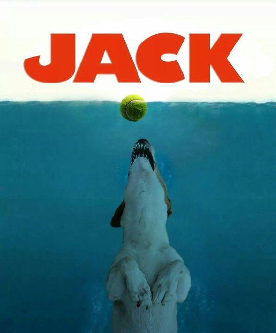 Jack attack!