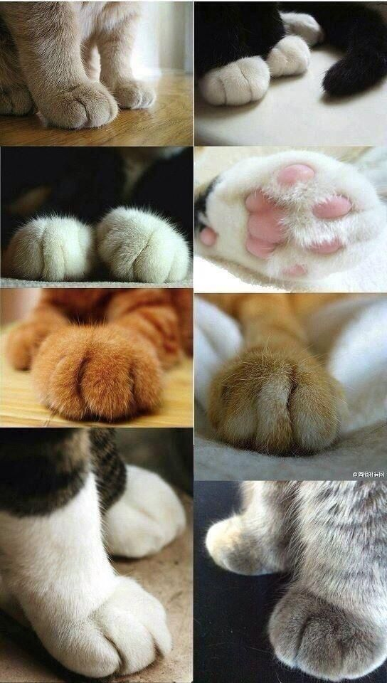 Cat paws are the cutest things ever.