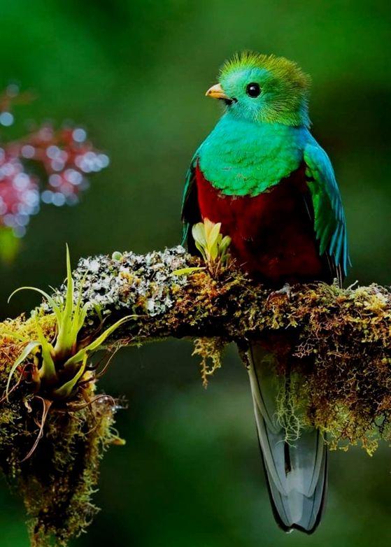 birdseye maple lumber, allbirds shoes