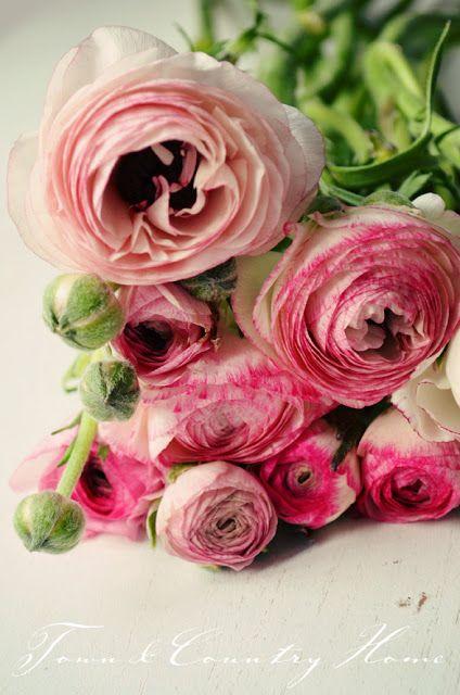 #renoncules roses #fleurs #mariage