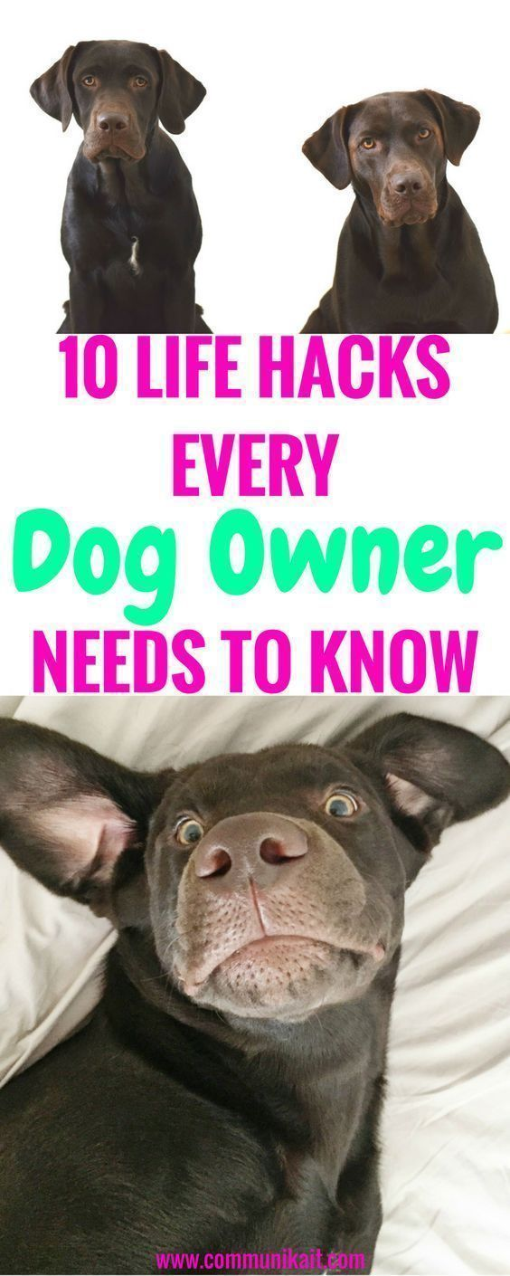 10 Life Hacks For Dog Owners Tips For Pets Puppy Tips Life Hacks For Dogs Puppy Tips Dog Care Communikait By Dog Owners Puppies Tips Dog Life Hacks