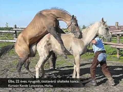 Horse mating | Horses | Pinterest | Horses, A thing and ...
