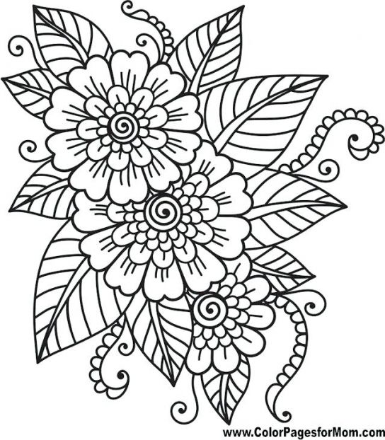 Simple Adult Coloring Pages Easy Printable Color Amazing Adult