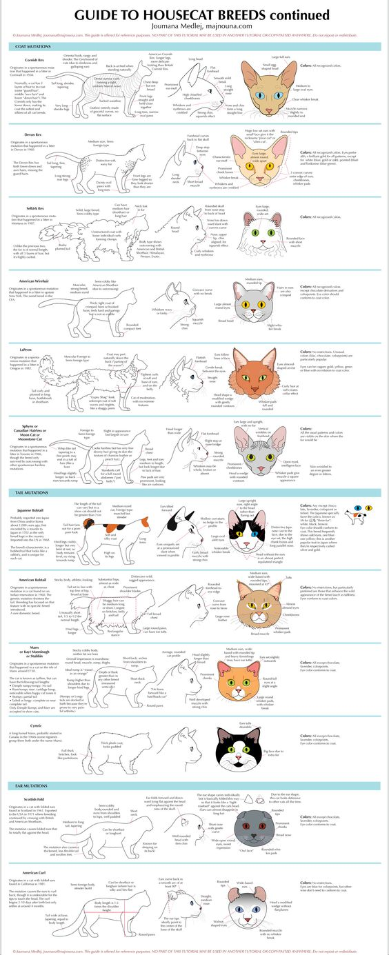 Character Design Challenge Of The Month : Cat breeds ★ character design references