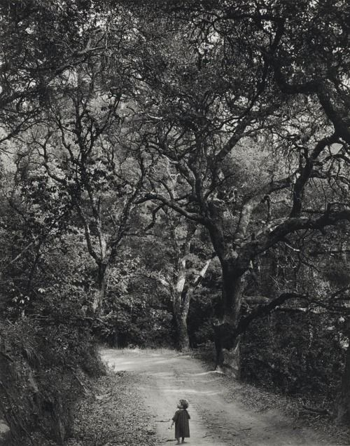 Wynn Bullock - Child on Forest Road, 1958