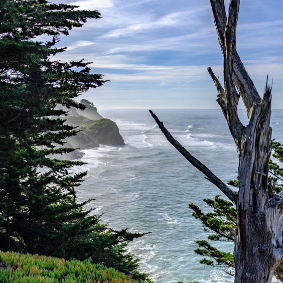 In 1969 The Moss Beach Tide Pool Area Now Known As Fitzgerald Marine Reserve Was Designated As A Natural Reserve Moss Beach Moss Beach Distillery Pool Area