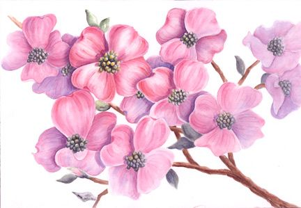 Demonstration Pink Dogwood by HAROLD - Watercolor lesson- Demonstration,Dogwood,HAROLD,Free Tutorials Network.shijieminghua.com