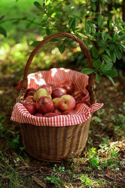 Story starter: The day I went apple picking.....