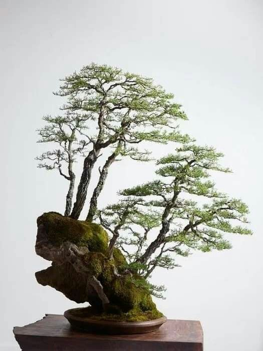 Pin By Ruben On Bonsai Insp2020 Bonsai Forest Bonsai Tree Care Bonsai Garden