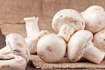 O efeito dos cogumelos na sua mesa