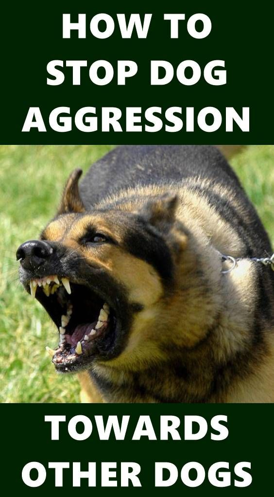 Dog Aggression Can Be A Serious Problem For Pet Owners Your Dog