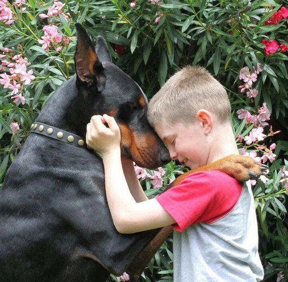 ♡Nico does this with me all the time!  This is so true. Dobermans really do love their families.