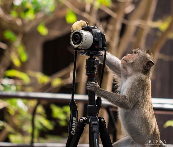 animais que querem ser fotografos (24)