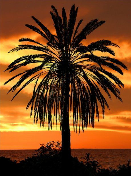 Palm Tree and Sunset: