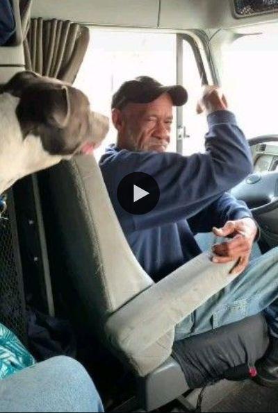 Cachorro, fica discutindo com o motorista porque ele tá demorando a dirigir.