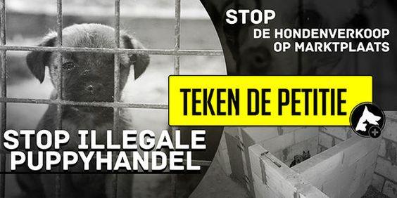 Stop Dog Sale On Martkplaats.nl