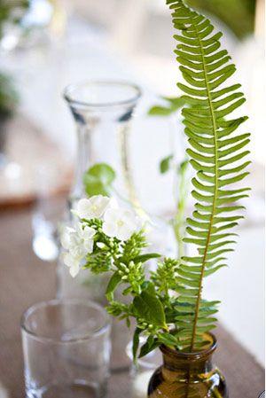 Ferns in vases