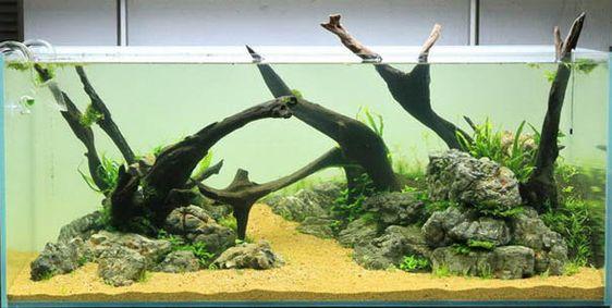 Wurzeln und Treibholz im Aquascaping - Aqua Rebell