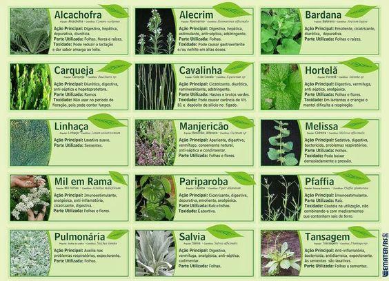 Plantas e chás: