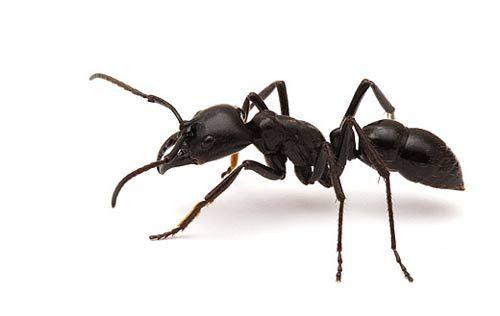 clase de hormigas - Buscar con Google