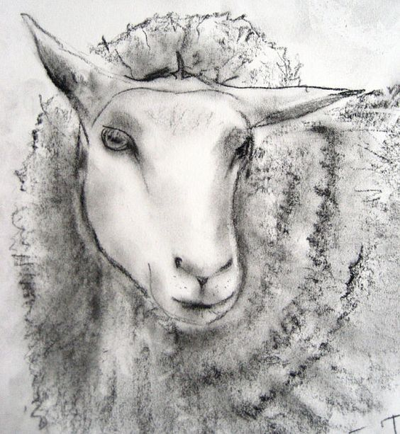 Image result for herdwick sheep drawings  DRAWING  Pinterest