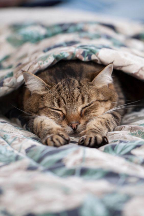Dormindo quentinho e relaxado...
