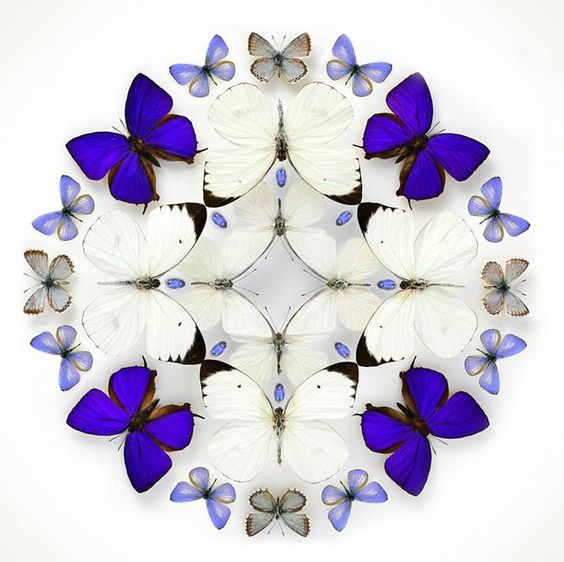 Beautifully Colorful Mosaics and Other Artistic Compositions Made from Exotic Insects by the Artist Christopher Marley: