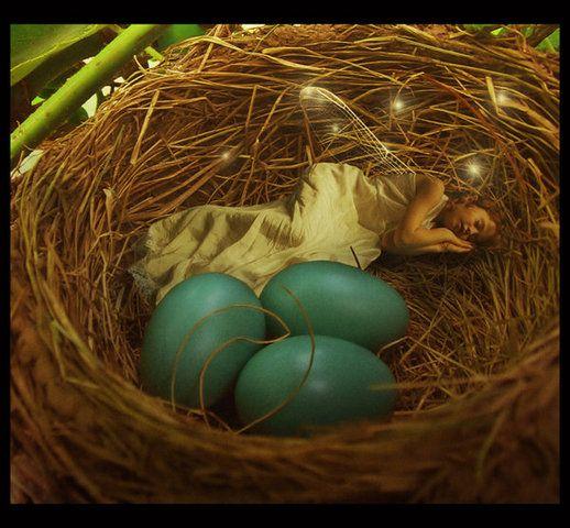 Fairy in the bird's nest.