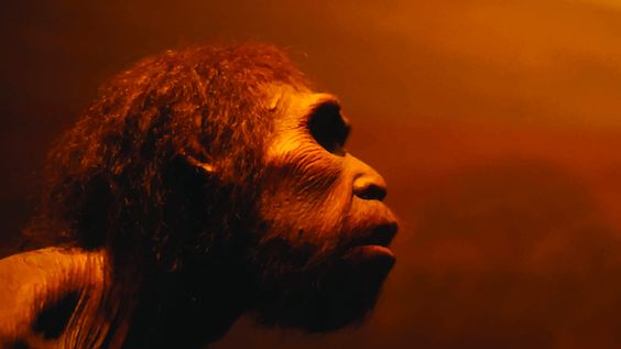 """A scientist at Harvard Medical School thinks he has enough Neanderthal DNA that he can """"reconstruct"""" the whole DNA strand."""