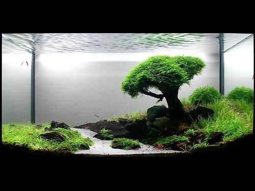 How to recreate this beautiful bonsai tree aquascape? - The ...